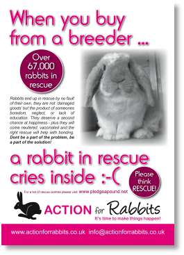Rabbit from a breeder.pdf